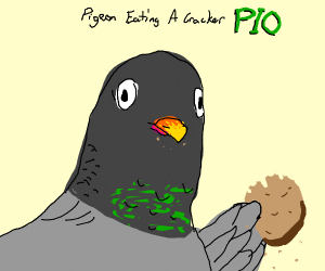 Pigeon Eating A Cracker PIO