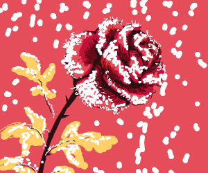 Roses with thin layer of snow on their petals