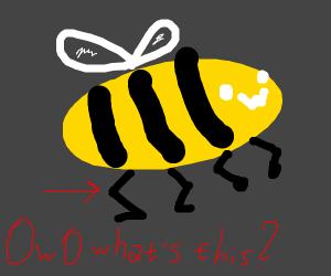Bee's leg