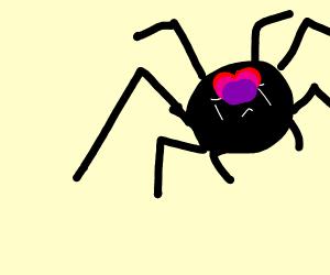 Don't kill the love spider