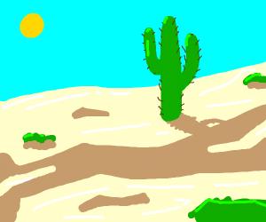 Desert, one cactus