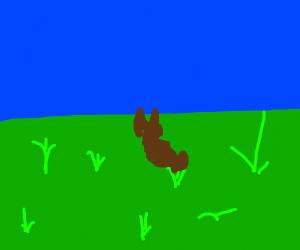 rabbit eating grass in an open field