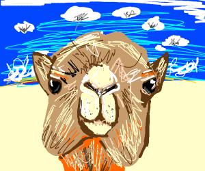 Pepe rides on camel through Sahara Desert
