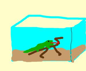 lizard in a terrarium licking a branch