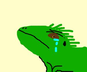 A sad iguana