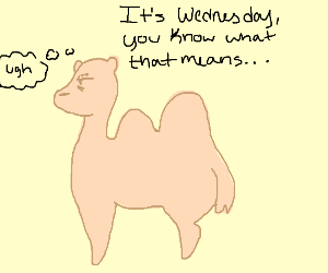 camel gets reminded of hump day