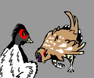 two chicken fighting