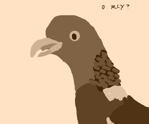O rly pigeon