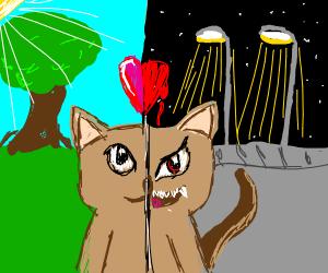 split purrsonality cat