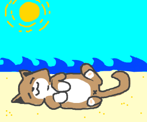 Cute cat lying on a beach