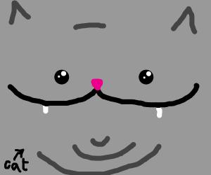 close up of gray cat