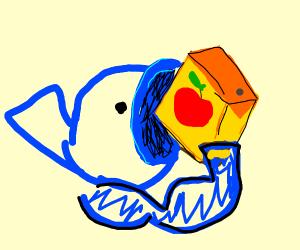 Buff fish eats juicebox