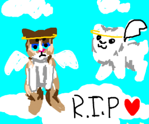 grumpy cat and gabe the dog in heaven