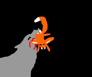 Big bad wolf attacks fox