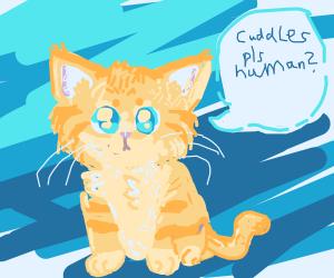 Cute Kitten Craves Cuddles