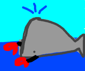 Boxing whale