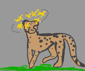 cheetah in a daze