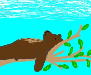 Lazy bear lying on a tree branch