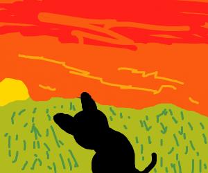 Kitty sunset