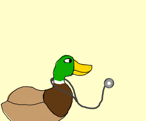 Green headed duck sporting a stethoscope