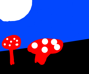 Mushrooms on a moonlit field