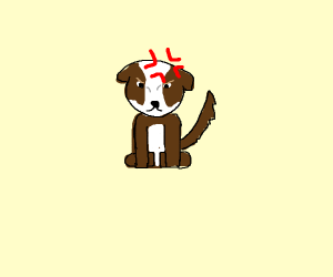 Angry small brown dog