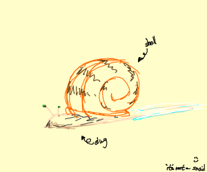 Slug with a shell