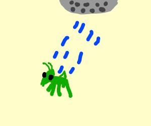Watering a grasshopper