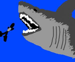 Diver finds Megalodon