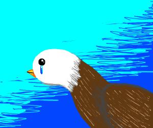 crying bird