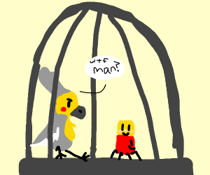 Bird and spider in a cave