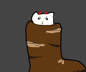 Evil cat in a shoe