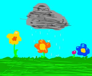 Only Orange Flower gets rained on