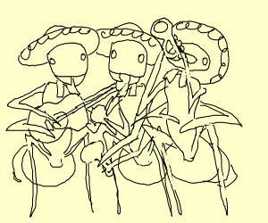 Mexican ant band