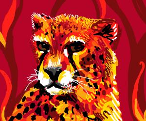 Cheetah is burned