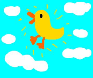sun shines a duck