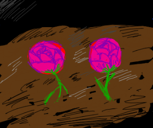 Two roses in a dirt field