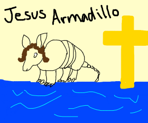 armadillo walking on water