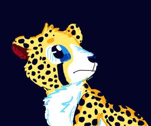 Cheetah looking worried