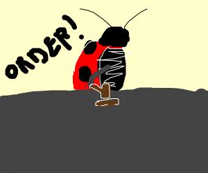 Ladybug Judge