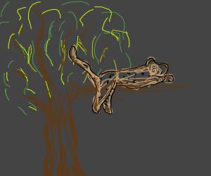 A Jaguar Sleeping on a Branch