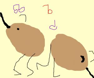 Kiwi birds dancing