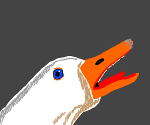 screaming duck