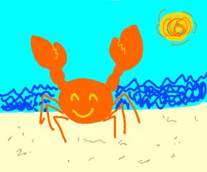 Happy crab at the beach