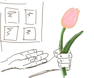 presenting a tulip to someone
