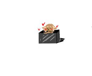 Cat in a steel box