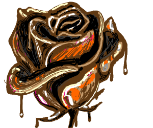 Melting chocolate rose