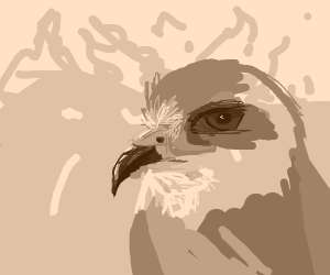 Eagle looking past a distant fire