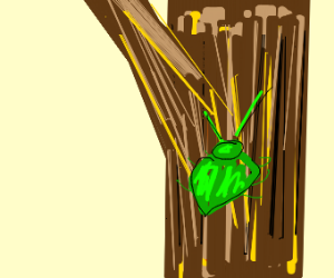 bug slouched on a tree