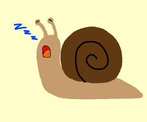 Snail Yawning